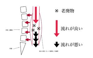 腸の流れ 腰椎 骨盤 ストレス 腰痛の原因 腸 膨張